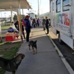Emprende gobierno municipal de Tulancingo campaña de esterilización de mascotas