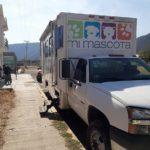 Tulancingo avanza en materia de esterilización de mascotas en febrero