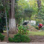 Padrón municipal de arbolado y planes de manejo tienen vigencia de cuatro años: dirección de medio ambiente