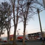 Medio ambiente informa sobre retiro de árboles secos en entrada al magisterio