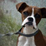 Existe coordinación entre gobierno municipal y ministerio público para atención a temas de agresión canina y maltrato animal